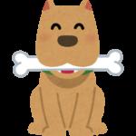 愛犬のためのおすすめペット用品